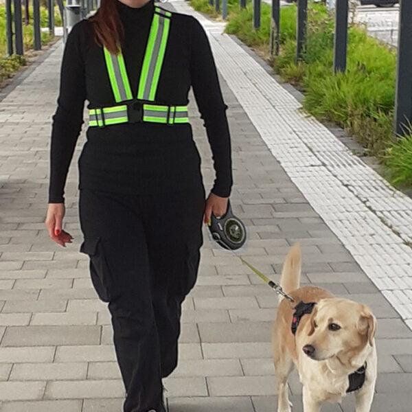 Rastning av hund - kvinna med gul reflexsele