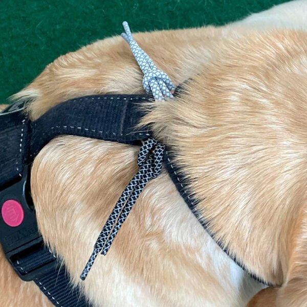 Reflexsnören i olika färger på en hundsele